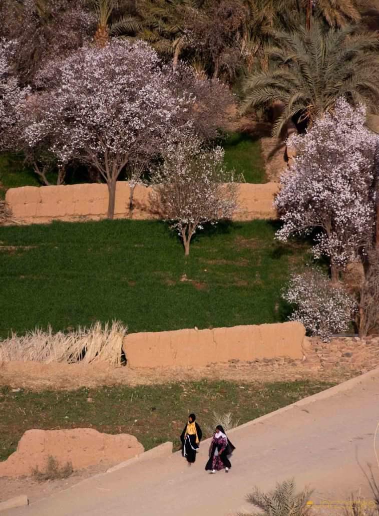 Oasis Draa valley